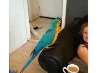 blue and gold /yellow macaw