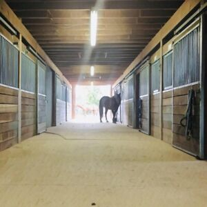 Horse Board - 1 stall left