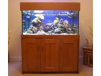 Marine fish tank (4ft x 2ft x 2ft) and bespoke solid wood cabinet plus corals, live rock + extras