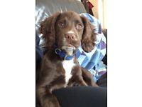 Missing family dog