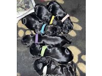 KC registered show cocker spaniel puppies