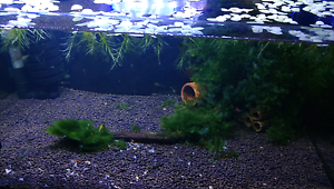 Shrimps and Tank all of them . Hinchinbrook Liverpool Area Preview