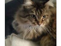 Missing cat in Hampton Village near Annadale Embankment, Ormeau area