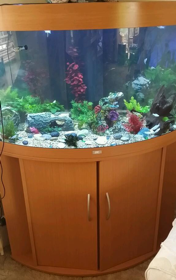 Juwel trigon 190 corner aquarium fish tank and stand for Corner fish tank for sale