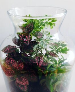 INDOOR/SHADE PLANTS FOR SALE!
