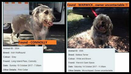 Wanted: City of JOONDALUP & surrounds lost & found pets