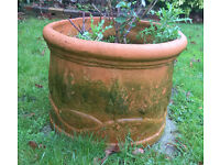 free if collected Sat 21/1/17 Ceramic teracotta pot