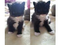 Five kittens, fluffy