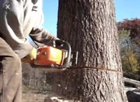 Experienced Man with a chainsaw