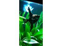 angle fish tropical fish
