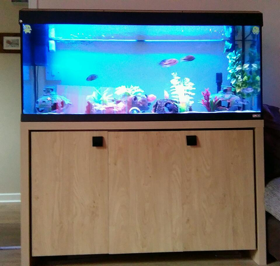 Fluval roma 240 aquarium fish tank - 4ft Fluval Roma 240 Fish Tank Aquarium For Sale