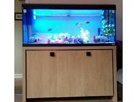 4ft fluval Roma 240 fish tank aquarium for sale