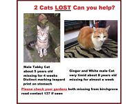 2 Cats Missing Tabby and Ginger & White Missing Birchgrove Area