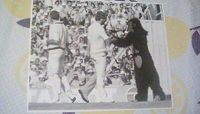 Ian Botham meets gorilla rare press photo vs Australia Old Trafford 1981