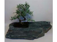 Hand carved beautiful Bonsai Art. Chinese Elm in Slate Rock