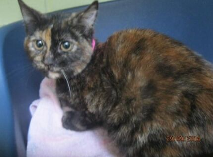 Jacinta is looking for her forever home Cranebrook Penrith Area Preview