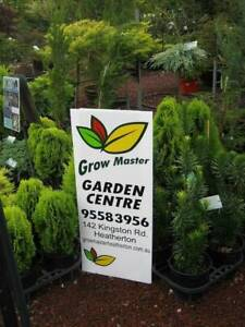 Conifer plants/Pencil pines. Prices start at $9.90 Heatherton Kingston Area Preview