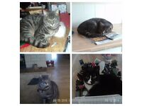 Missing cats, someone is stealing them!!!