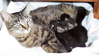 SPONSOR NURSING MOM and KITTENS CATS RECEIVE PHOTO NONPROFIT FERAL CAT RESCUE