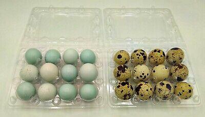1 Dozen Rare Mixed Mutation Coturnix Quail Eggs-celadon Pearl Silver Pastels