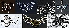 Collectible Insects Etc