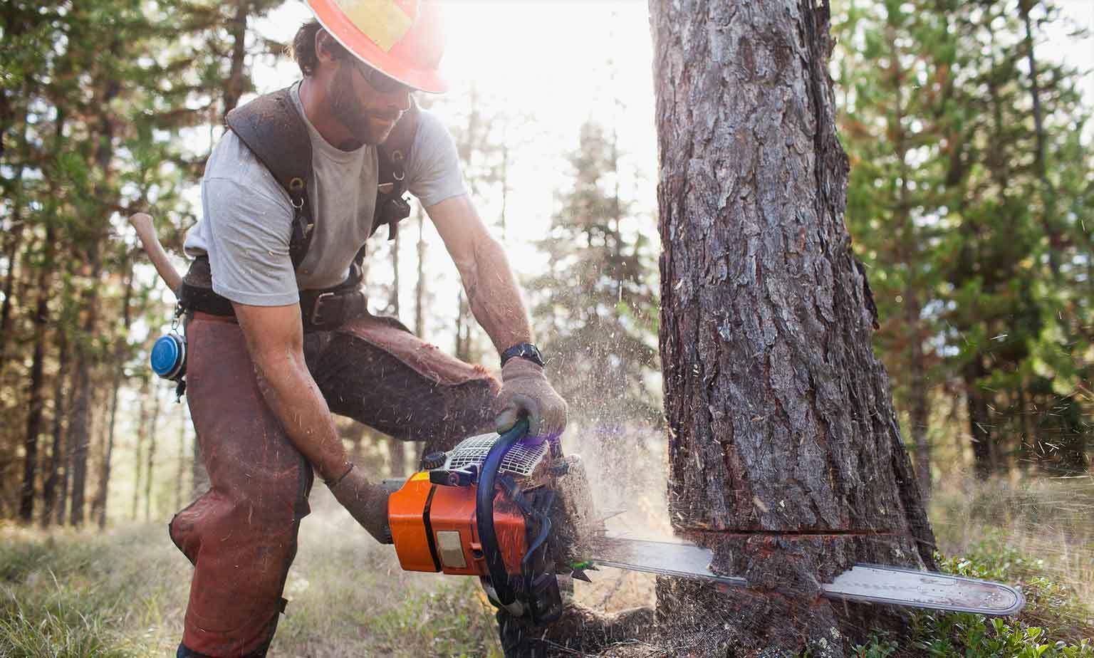 Bis zu -30% auf Gartenbau- & Forst-Equipment