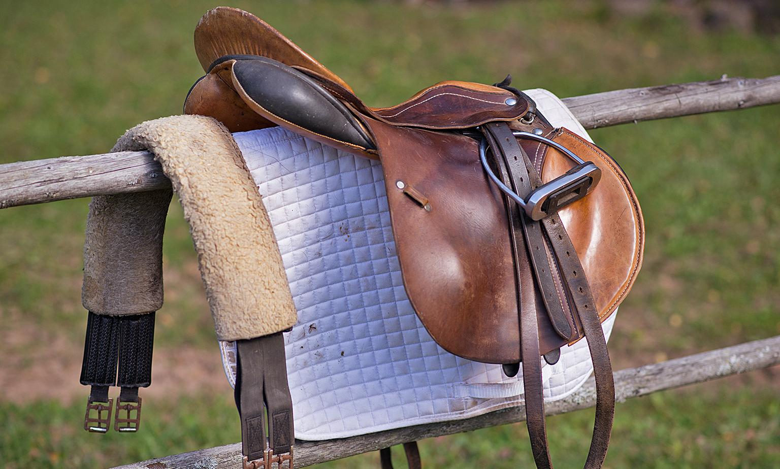 Das passende Exemplar für Pferd und Reiter