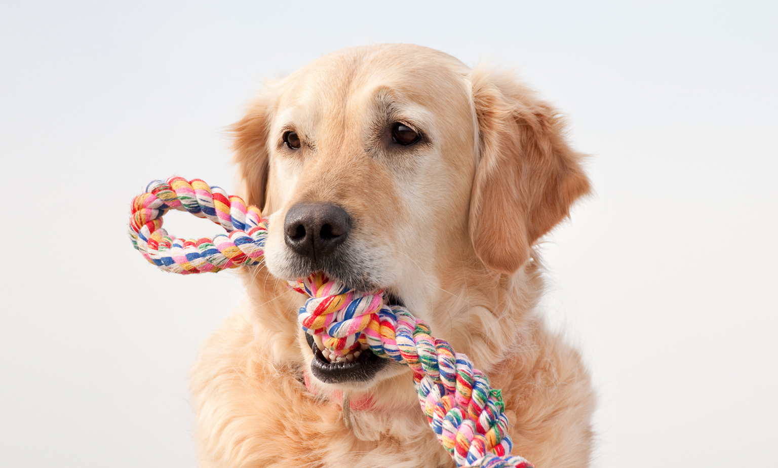 Pet Toys from $5