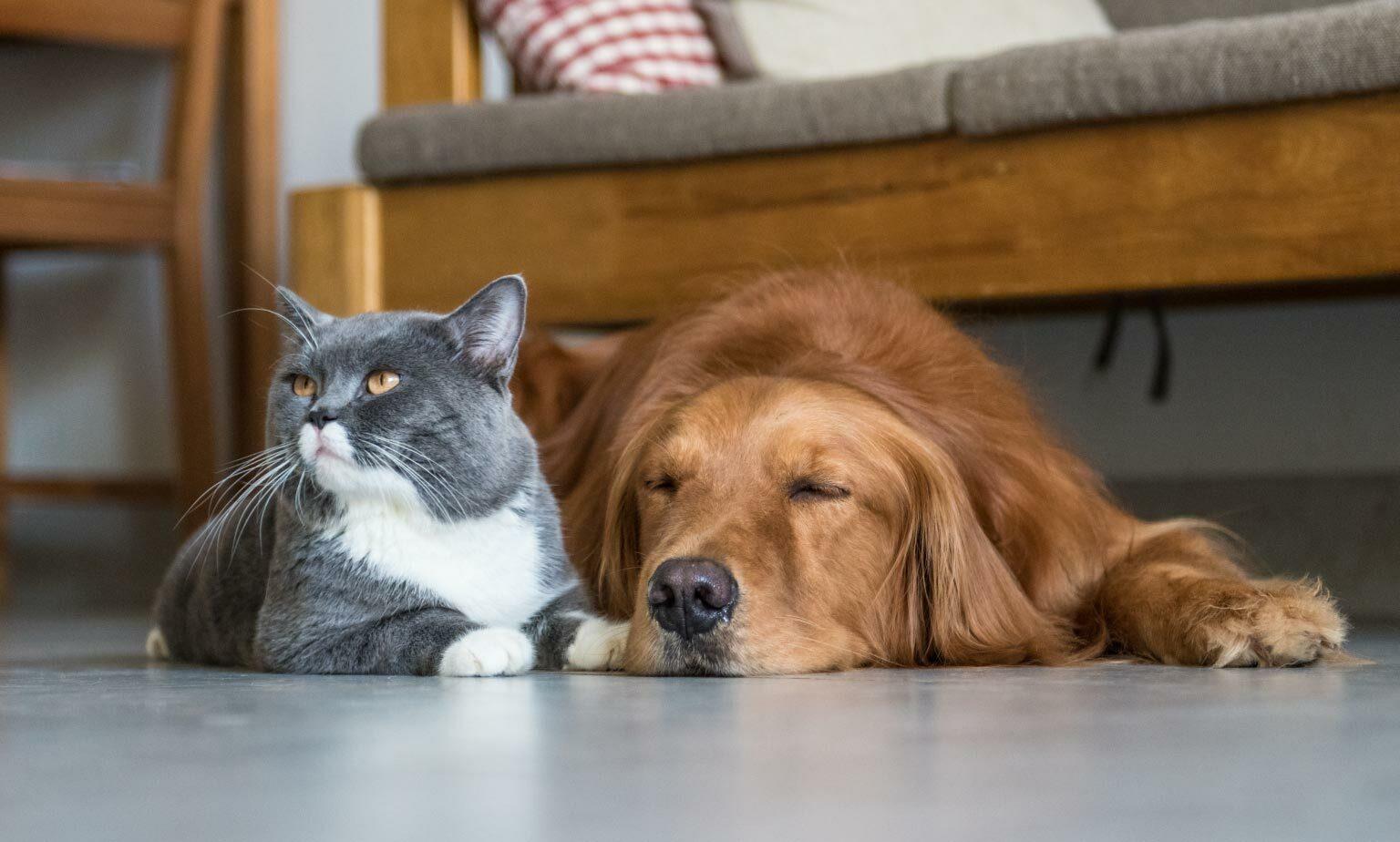 Risparmia sugli articoli per animali