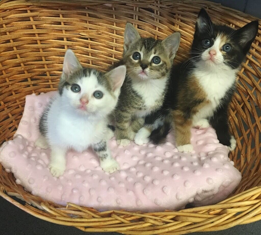 Sparkling Little Baby Kittens in Clifton Manchester