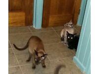 Original kittens