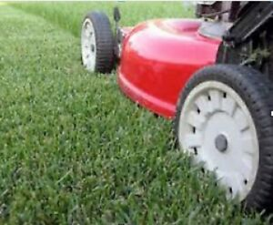 Grass cutting, maintenance and more