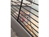 Beautiful Female Syrian Hamster