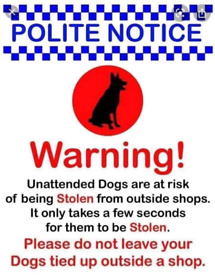 Stop leaving dogs out side shops