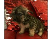 Puppy need a nice and lovely home