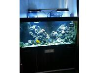 Large 5ft Marine reef Tank