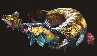 Aufkleber Hecht Barsch Zander Fishing Auto Köderbox Pike Bass Angelkoffer