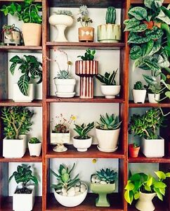 WANTED: succulent seedlings Booragoon Melville Area Preview