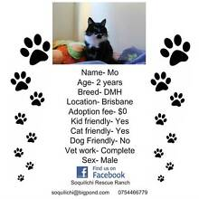 2 year old male DMH available for adoption Yandina Maroochydore Area Preview