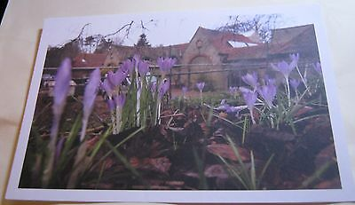 England Crocuses on the lawn of Watts Gallery Anne Purkiss - unposted