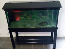4FT FISH TANK, STAND, ACCESSORIES + OSCAR Mango Hill Pine Rivers Area Preview