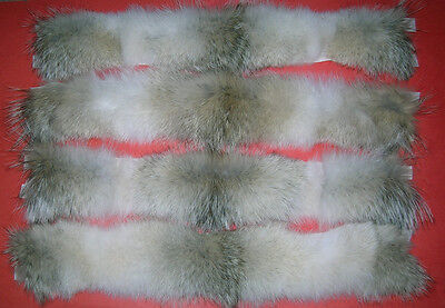 "24"" COYOTE FUR COLLAR/STRIP/PARKA HOOD/JACKET HOOD/RUFF/TRIM"