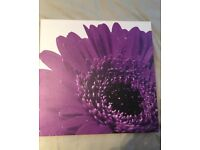 Purple Flower Cancas