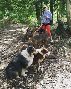 DOG WALKER Bruce Belconnen Area Preview
