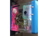 Fish tank and everything you need to get started