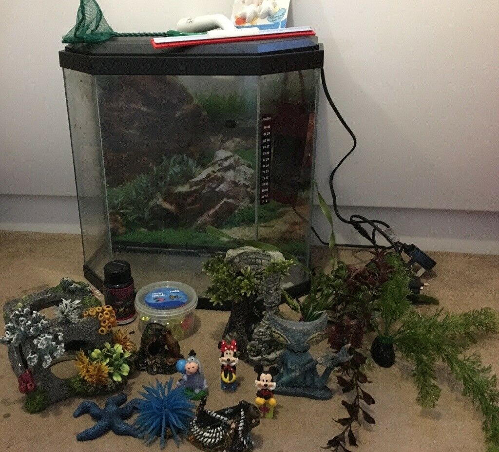 25ltr Fish Tank and assessories for sale
