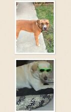 2 missing dogs Golden Plains Preview