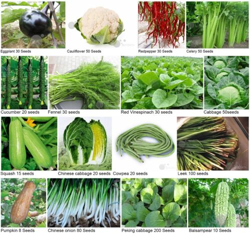 Heirloom Garden vegetable seed Non-GMO seeds bank ...