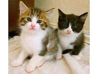 Kittens 1 male/1 female
