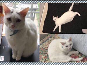 LOST / Runaway Cat Harriet